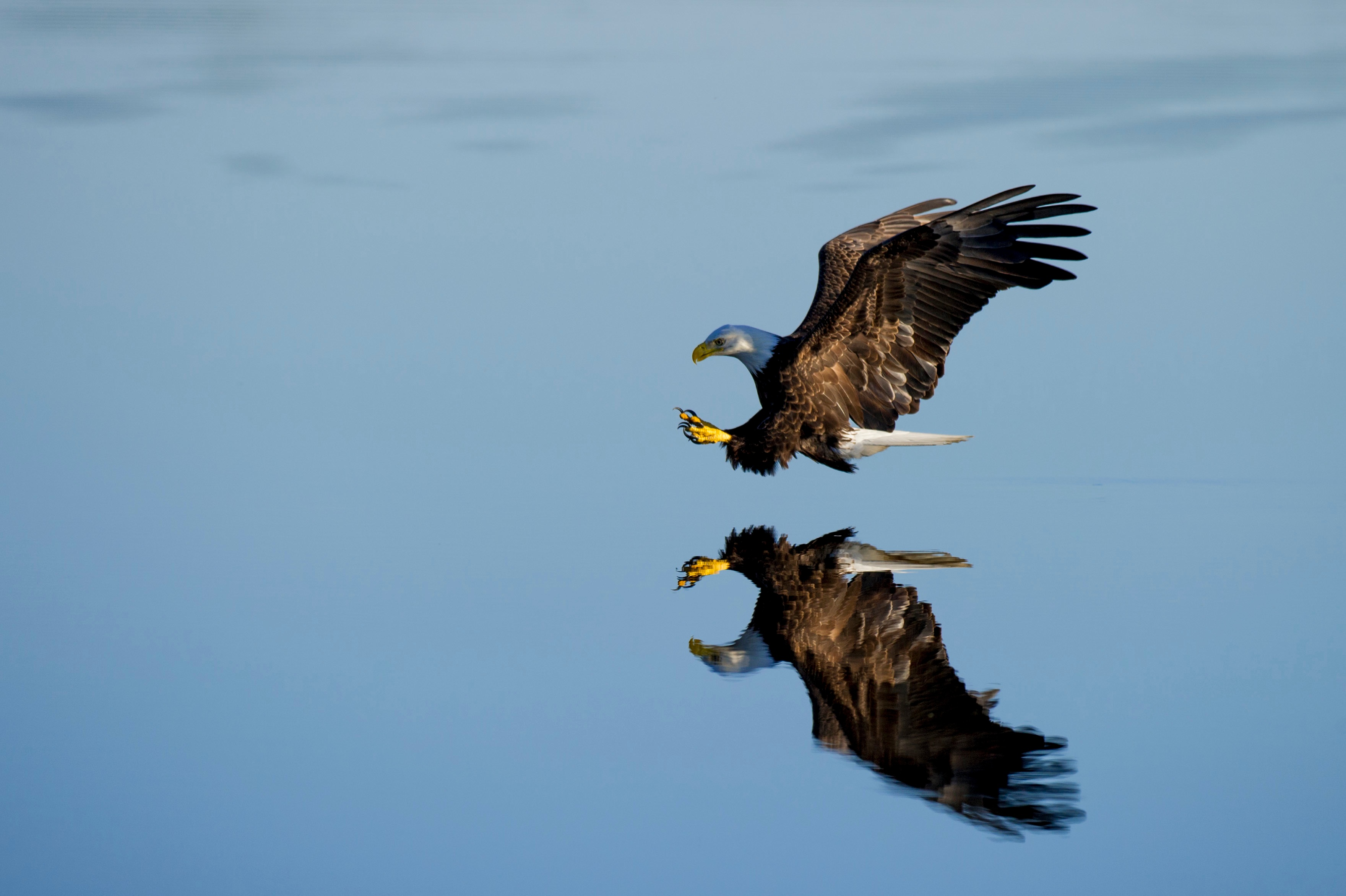 example image of eagle in flight using a fast shutter speed