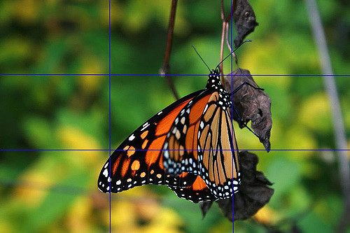 image of butterfly in nature used to explain the concept of rule of thirds