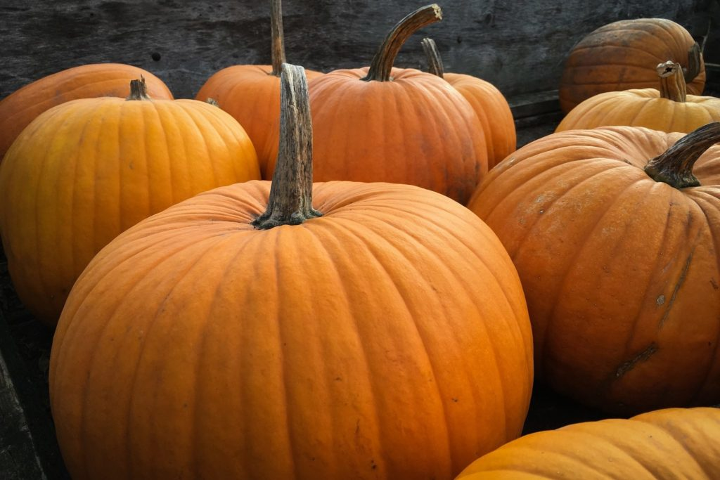 a nice image of some pumpkins around halloween time