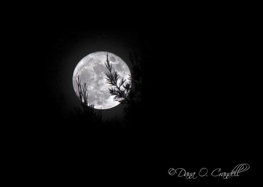 Cover image of a bright white moon against a black dark night sky by photographer Dana Crandell
