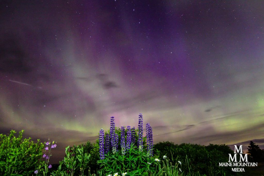 Image showing purple flowers and a nightscape of the northern lights as an example of nightscape photography settings