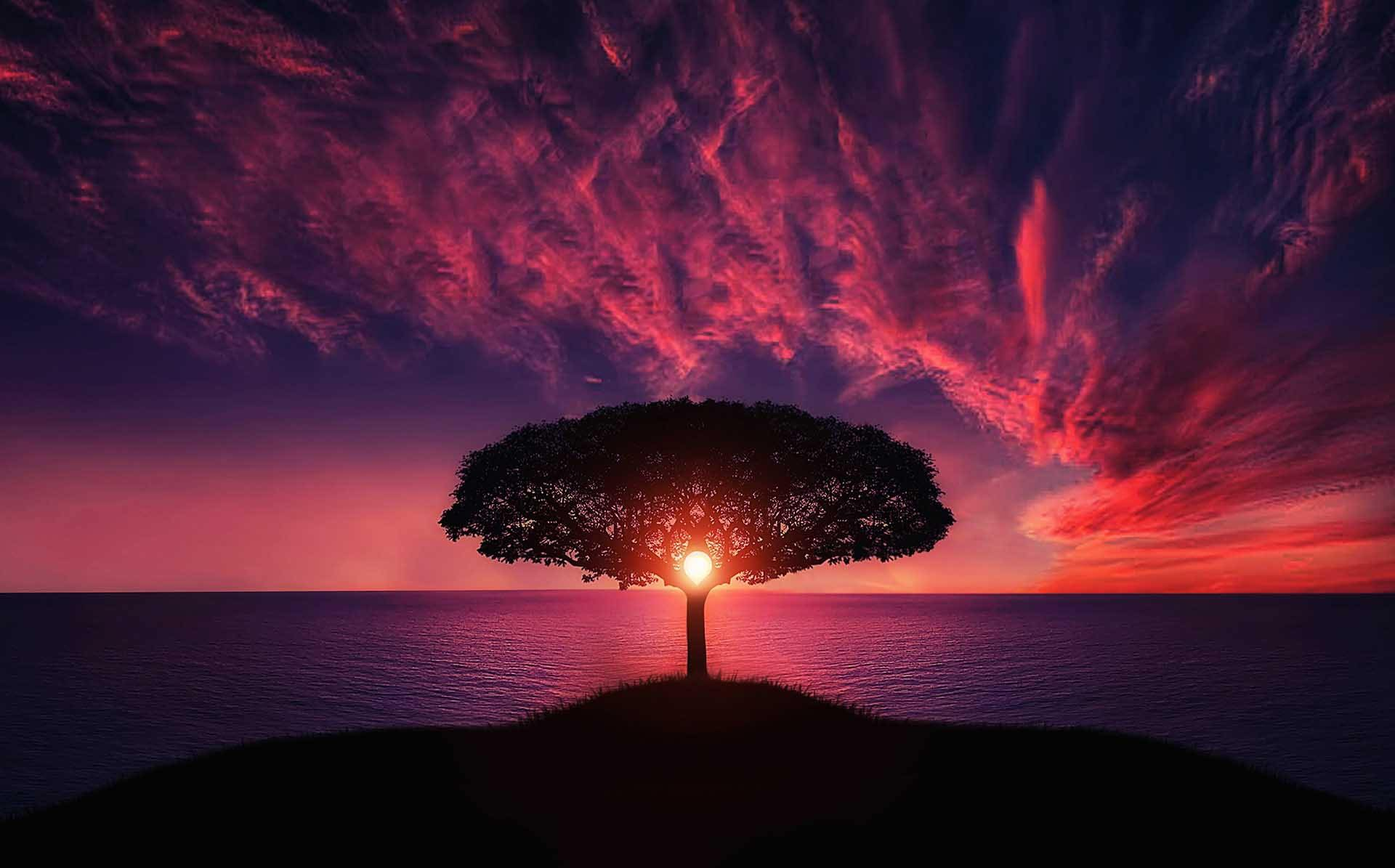 Cover image of a tree with the sun behind it and a sunset for article on creative nature photography