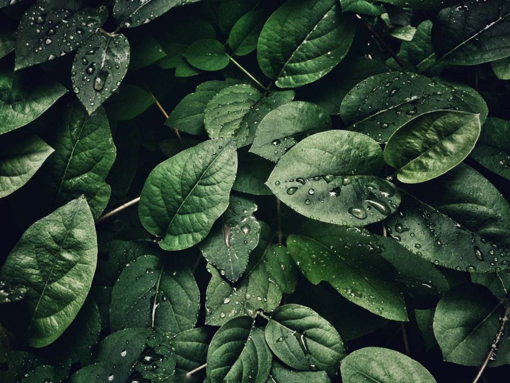 Image of leaves in nature