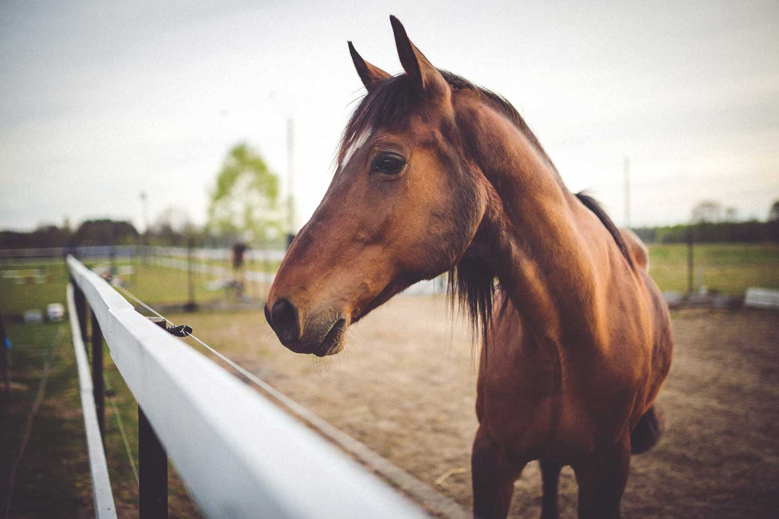 88 Horse Photography Hashtags to Gallop Your Way to More Followers