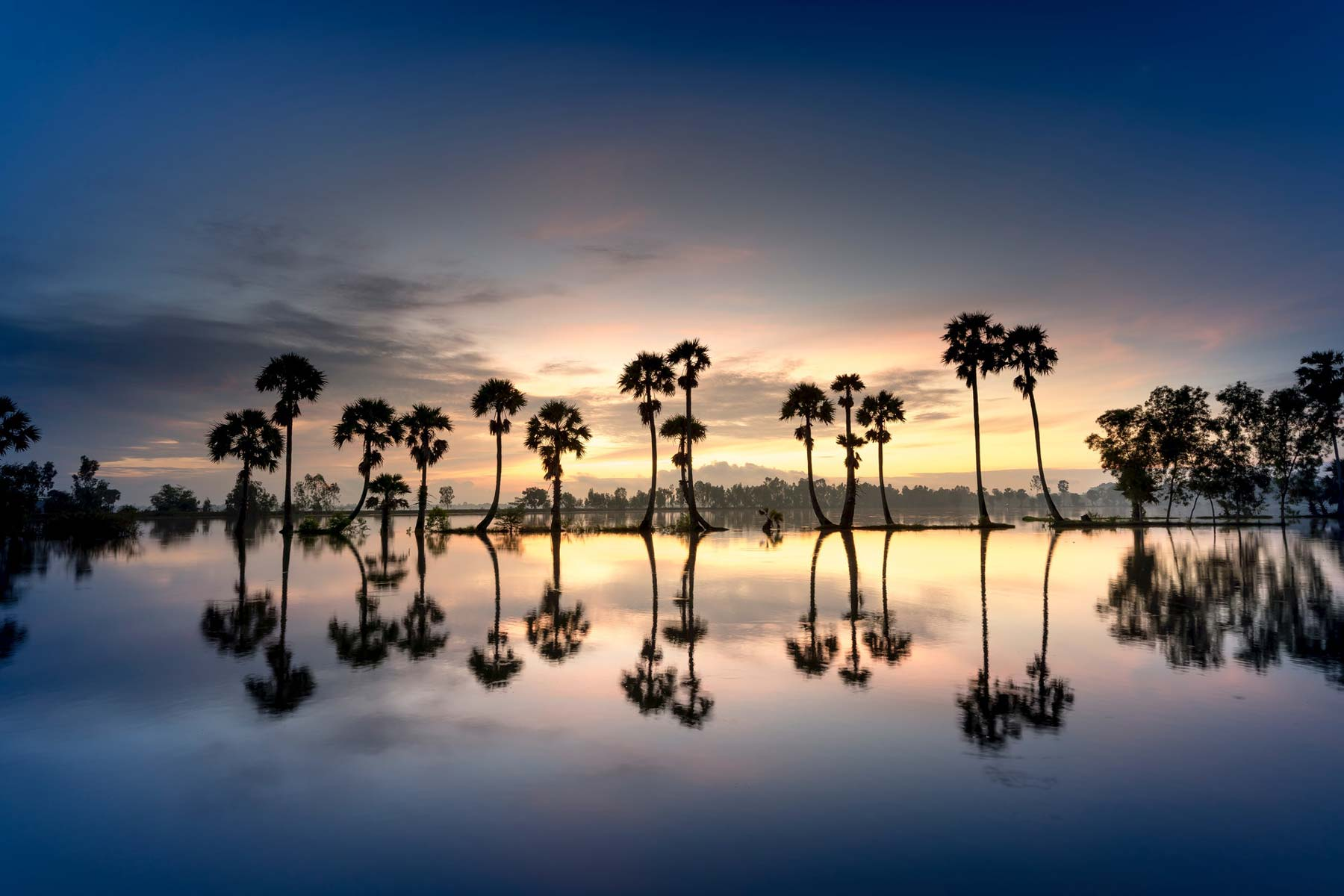 Image of palm trees reflecting on water
