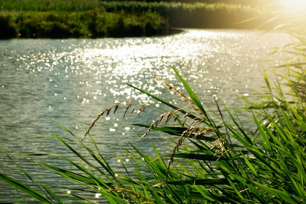 Image taken from a riverbank of a river, the vegetation around it with the sun setting